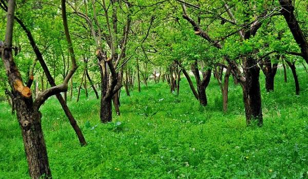 آدرس روستای حصار,تصاویر روستای حصار,جاذبه های گردشکری مشهد