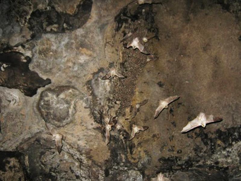 آدرس غار مزدوران,عکس های غار مزدوران,غار مزدوران