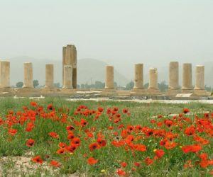 باغ پاسارگاد,باغ پاسارگاد در شیراز,باغ پاسارگاد شیراز