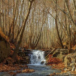 پارک جنگلی شاندیز,پارک جنگلی شاندیز مشهد,پدیده شاندیز