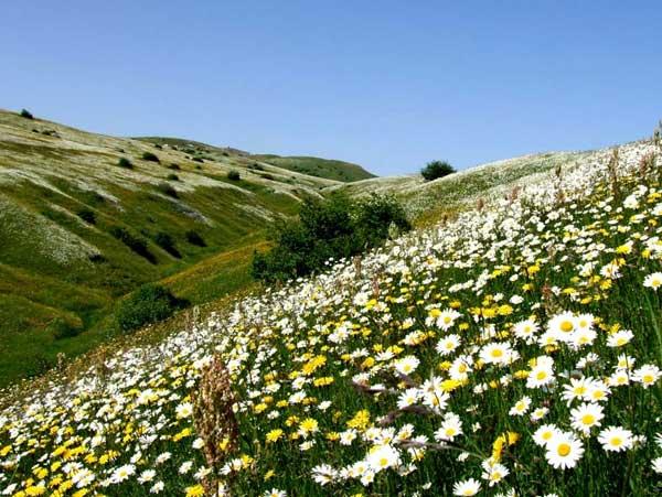 سازهای سنتی اردبیل,صنایع دستی اردبیل,صنایع دستی استان اردبیل