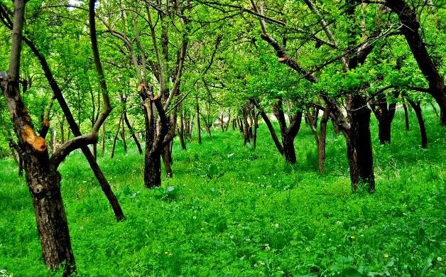 [عکس: torghabe-mashhad.jpg]