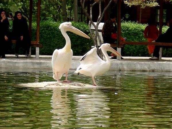 آدرس باغ پرندگان,آدرس باغ پرندگان اصفهان,باغ پرندگان