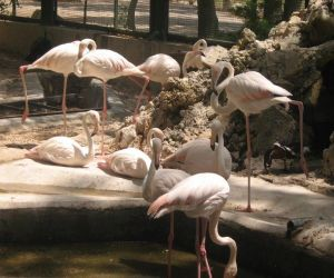 آدرس باغ پرندگان اصفهان,آدرس باغ پرندگان در اصفهان,باغ پرندگان اصفهان