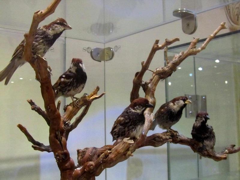 آدرس موزه تاریخ طبیعی تهران,عکس موزه تاریخ طبیعی تهران,موزه تاريخ طبيعي تهران
