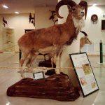 بنای تاریخی,تاریخچه موزه تاریخ طبیعی,عکس موزه تاریخ طبیعی تهران