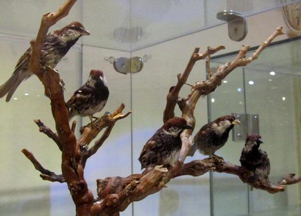 موزه آکواریوم تهران,موزه تاریخ طبیعی,موزه تاریخ طبیعی تهران هفت تیر