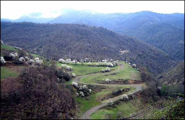 اقامت در جنگل فندقلو,پیست اسکی روی چمن,تصاویری از جنگل فندقلو
