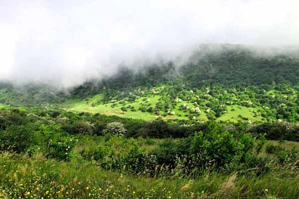 مسیر جنگل فندقلو