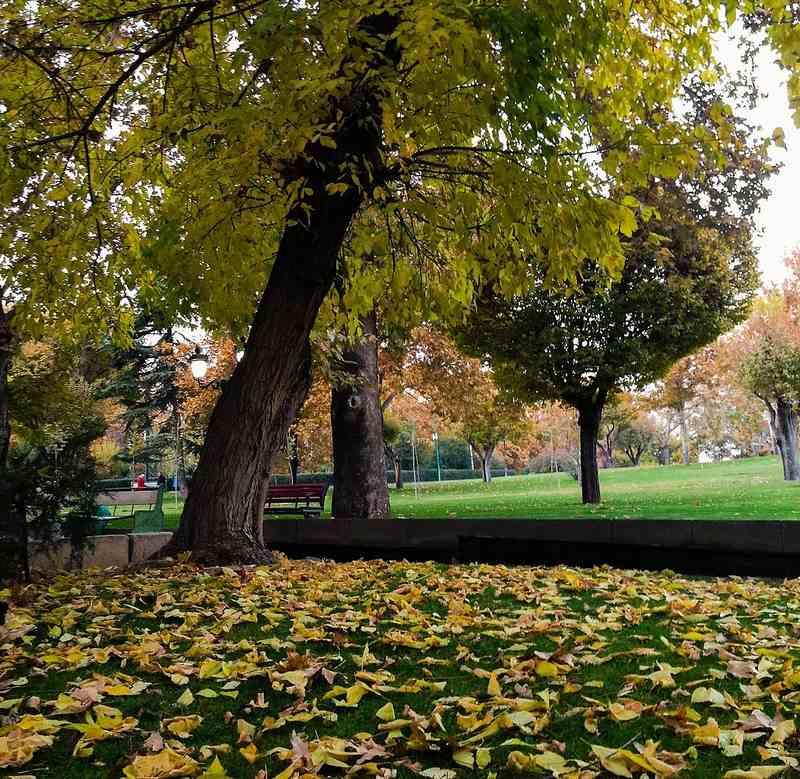بوستان ملت تهران,پارک ملت,پارک ملت تهران