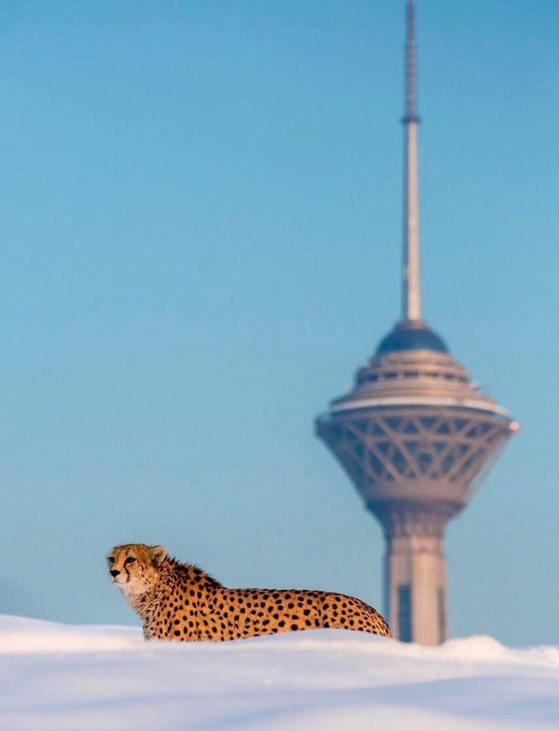 پارک پردیسان تهران کجاست,پارک جنگلی پردیسان,پارک جنگلی پردیسان تهران