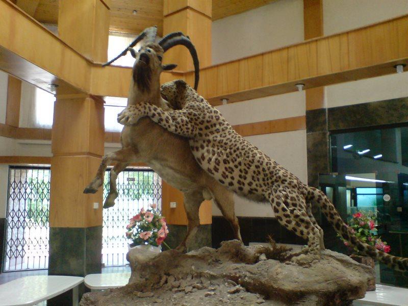 موزه تاریخ طبیعی,موزه تاریخ طبیعی اردبیل,موزه حيات وحش اردبيل