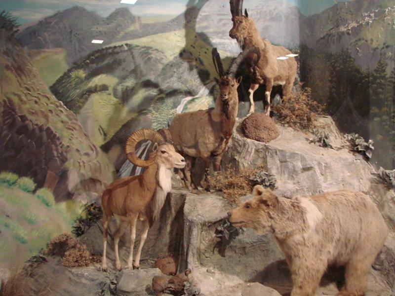 موزه حیات وحش,موزه ی حیات وحش اردبیل