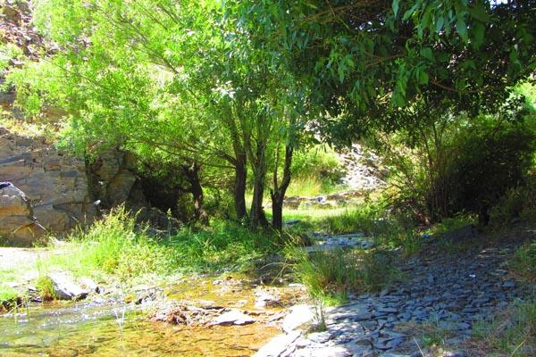 سایه درخت و آب رودخانه ...