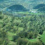 پارک جنگلی شورآب لرستان,پارک جنگلی شوراب خرم آباد,پارک جنگلی شوراب کجاست