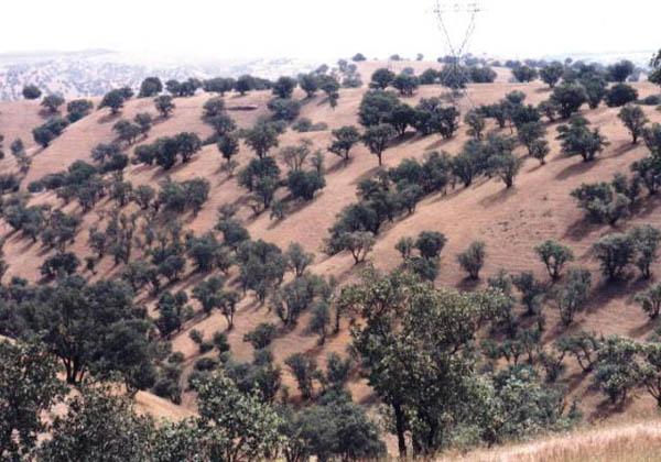 عکس پارک جنگلی شورآب خرم آباد