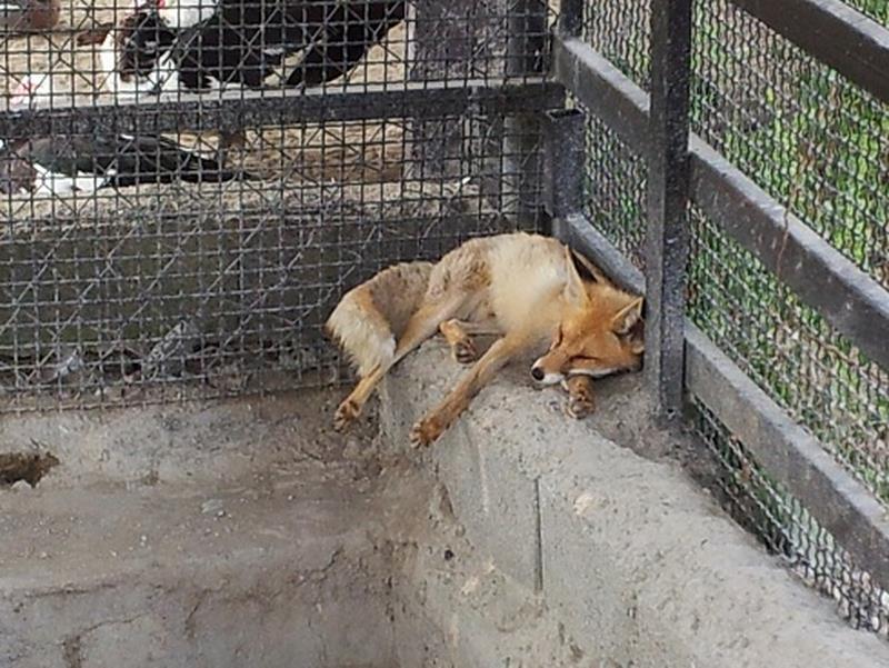 نتیجه تصویری برای باغ وحش ذغال چال