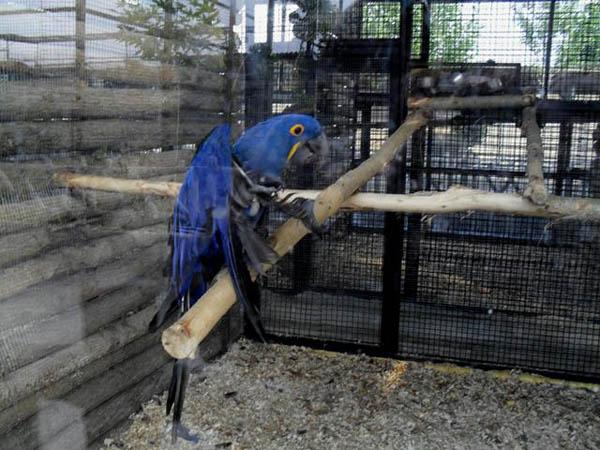 مرغ مینا باغ وحش ساری