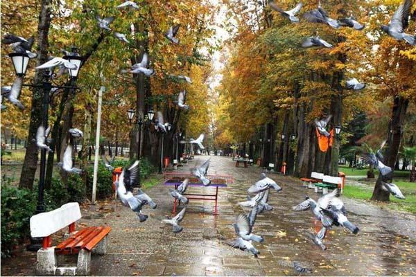 mohtasham-garden1