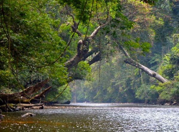 taman-negara-national-park