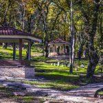 ادرس پارک جنگلی شهید زارع در ساری,پارك جنگلي شهيد زارع ساري,پارک جنگلی شهید زارع