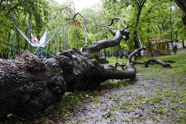 عکس پارک جنگلی شهید زارع