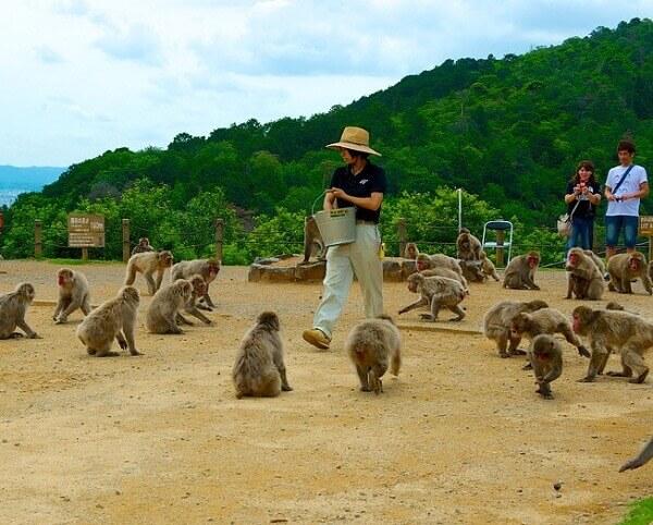 Arashiyama-Monkey-Park