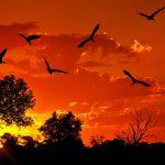 جاذبه های گردشگری کنیا