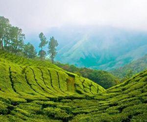تور کرالا هند,جاذبه های توریستی کرالا,جاذبه های دیدنی کرالا