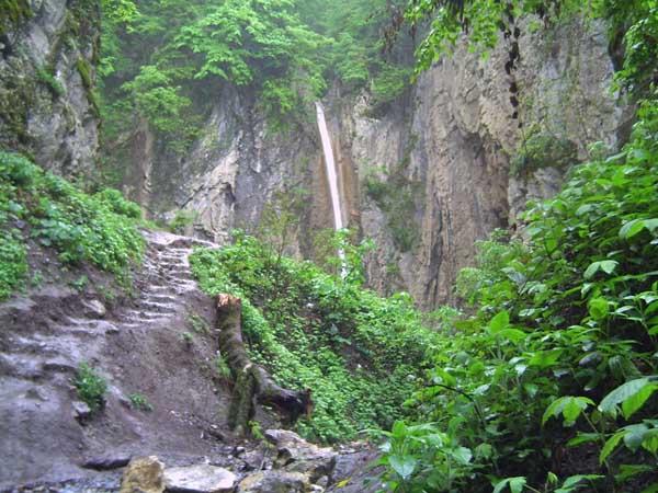 جنگل های شمال ایران
