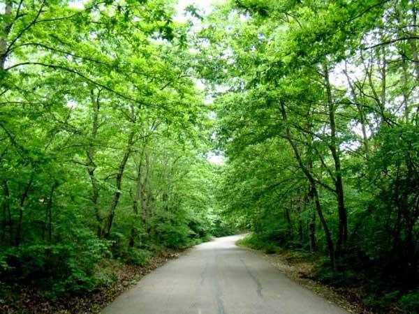 آدرس پارک جنگلی سراوان رشت,پارک جنگلی,پارک جنگلی رشت