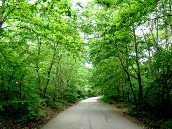 saravan-forest-park1