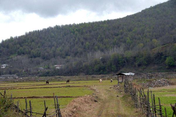 saravan-forest-park3