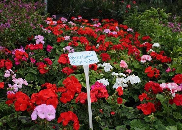 شماره تماس بازار گل و گیاه اصفهان,عکس بازار گل و گیاه همدانیان