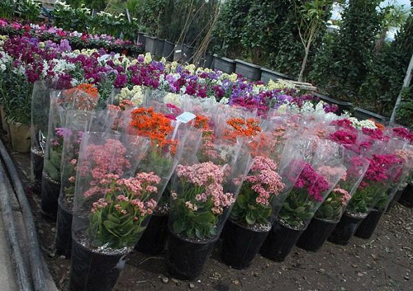 آدرس بازار گل و گیاه اصفهان,بازار بزرگ گل و گیاه همدانیان,سایت بازار گل و گیاه همدانیان