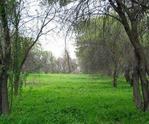 پارک جنگلی چاه کوتاه,پارک جنگلی چاه کوتاه بوشهر,پارک جنگلی چاهکوتاه