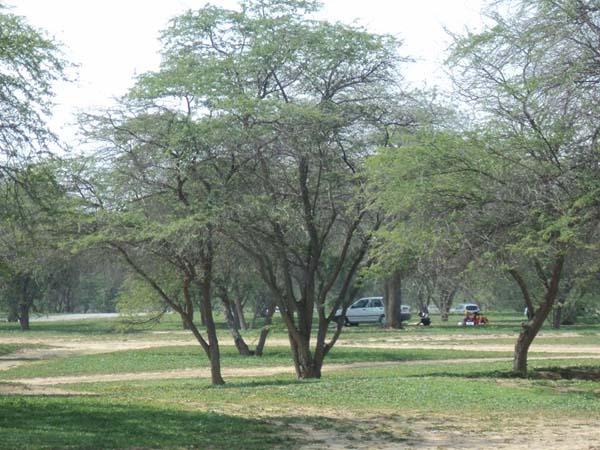 پارک های جنگلی بوشهر,چاه کوتاه بوشهر,چاهکوتاه بوشهر