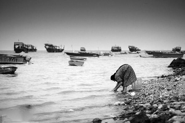 جزیره شیف,جزیره شیف استان بوشهر,روستای شیف بوشهر