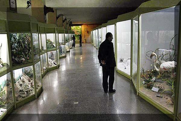 موزه تاریخ طبیعی استان همدان,موزه تاریخ طبیعی در همدان,موزه تاریخ طبیعی شهر همدان