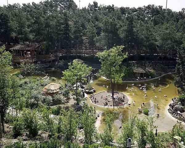 sadaf-birds-garden2