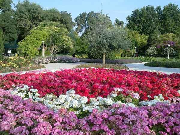 flower-garden-4