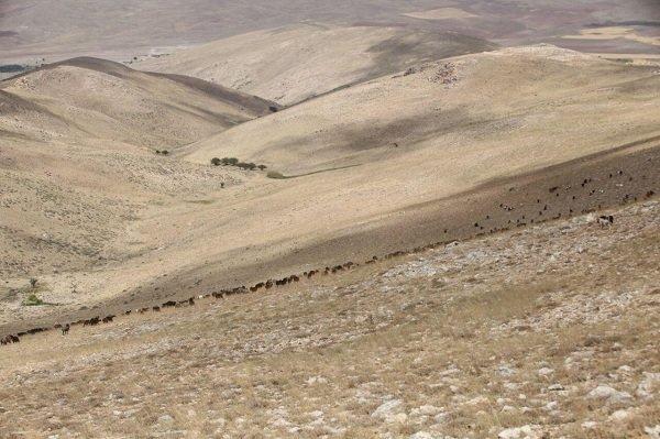 باشگل قزوین,جاذبه های گردشگری قزوین,حیات وحش ایران