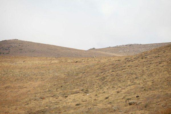 bashgol-area-18