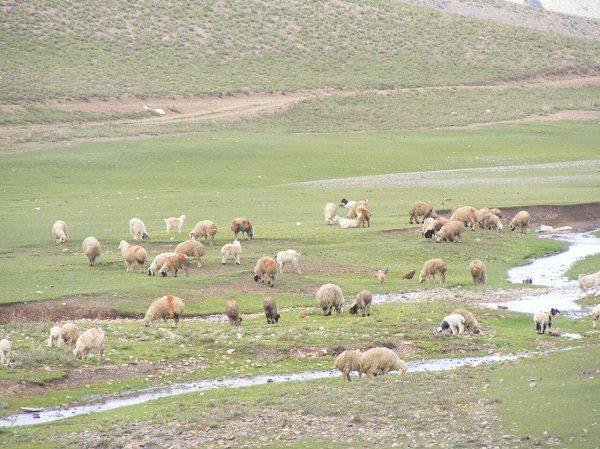 جاذبه های دیدنی کرمان,رابر کرمان,رودخانه هنزا کرمان