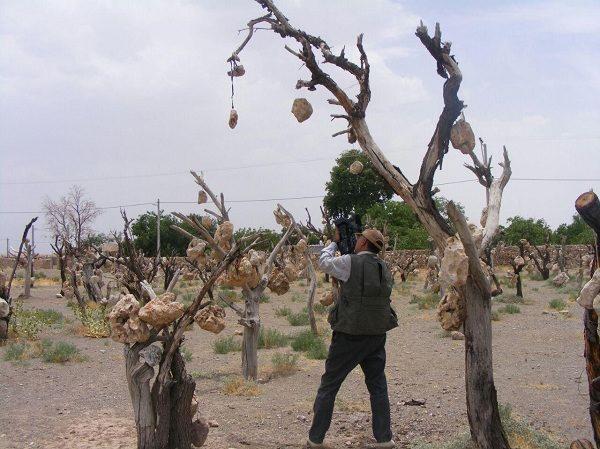 روستای میاندوآب بلورد,عکس های باغ سنگی سیرجان