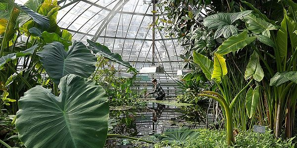basel-botanischer-garten_kopfbild