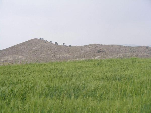 جاذبه های گردشگری کرمان,روستای گوغر,روستای گوغر بافت