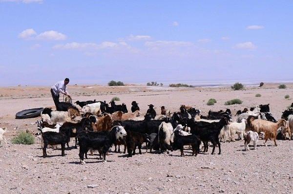 جاذبه های گردشگری سیستان و بلوچستان,زندگی عشایری,زندگی عشایری در ایران