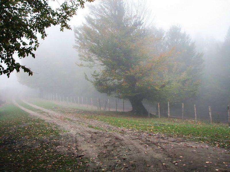 عکس های جنگل ابر,مسیر جنگل ابر