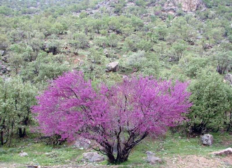 جاذبه های گردشگری ایلام,دره ارغوان,مسیر تنگه ارغوان